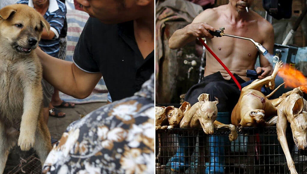 China Yulin Dog meat festival 2020