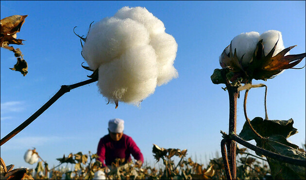 US blocks cotton exports from China